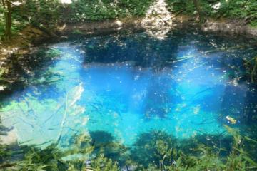 幻想的な美しさ!白神山地の青池とは?