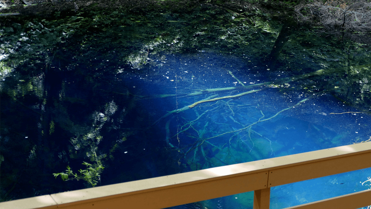 白神山地の青池の魅力